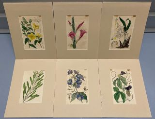 SIX original hand-colored flower prints from Curtis's Botanical Magazine 1840 - each one matted...